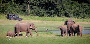 Planning A Safari