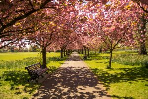 8 Cool Things to Do in London In The Summer